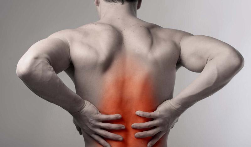 Немного анатомии Любое упражнение вы станете выполнять лучше, начав, хоть немного разбираться в участвующих в процессе мышцах. Спина делится на участки: в верхнем находятся трапеции и ромбовидная мышца, в среднем — широчайшие, а длинная мышца спины, отвечающая за защиту позвоночника, идет по всей длине.
