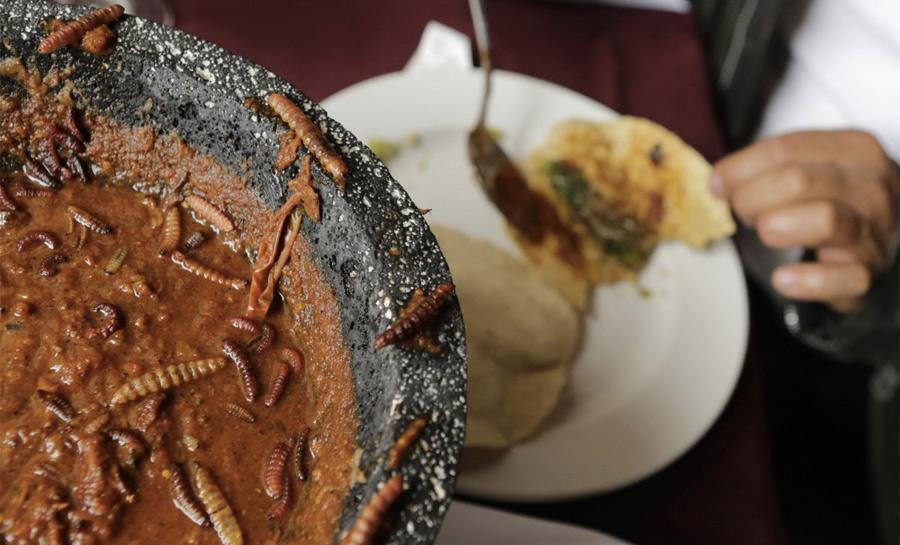 В Мексике некоторые насекомые считаются деликатесом. Как, например, эти живущие на агаве черви, которыми начиняют тако.