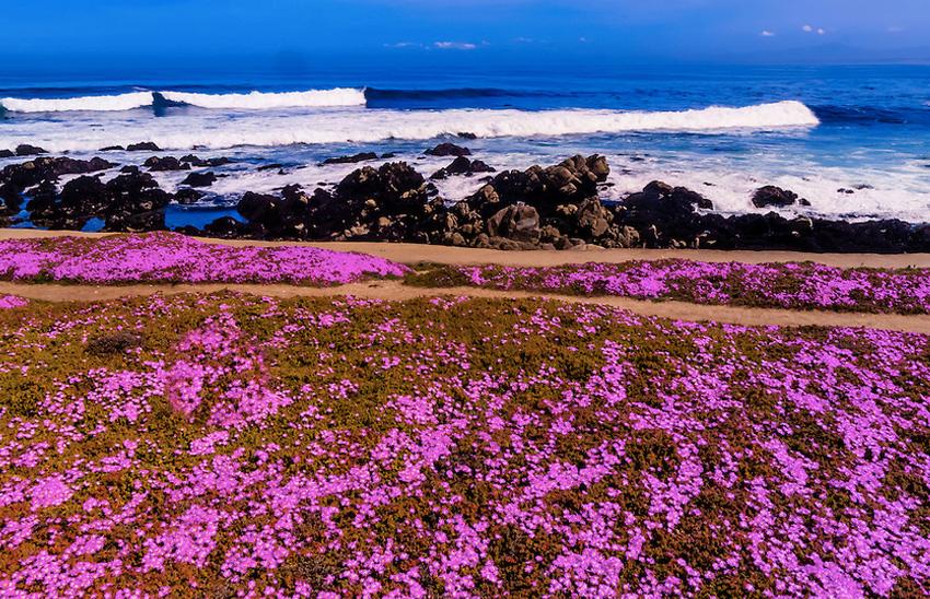 Тропа в Калифорнии, США Морское побережье Калифорнии простирается от штата Орегон на севере до Мексики на юге. Главные пешеходные маршруты расположены как раз ближе к югу. Тропы проходят через цветущие луга, вдоль песчаных пляжей, а по другую руку от вас будет Тихий океан.