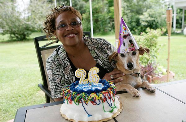 Собака Макс, 29 лет и 282 дня В 2013 году рекорд долголетия установил терьер Макс. Собака прожила 29 лет и 282 дня. Макс стал первой в мире собакой, которая не дожила всего пару месяцев до 30-летнего возраста. Пес был увековечен в Книге рекордов Гиннесса.