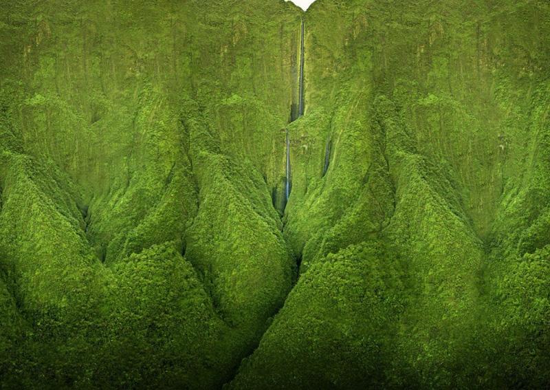 К такому влажному и высокогорному климату может приспособиться не всякая растительность. Но лишайники, плауны, осока и прочие растения чувствуют себя здесь более чем комфортно, покрывая всю поверхность горы густой зеленью.