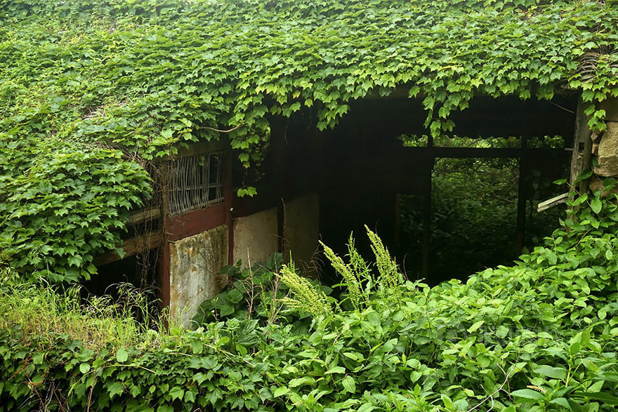 Стоило людям покинуть место, как в оставшейся в запустении деревне природа начала заново «отвоевывать» свою территорию.