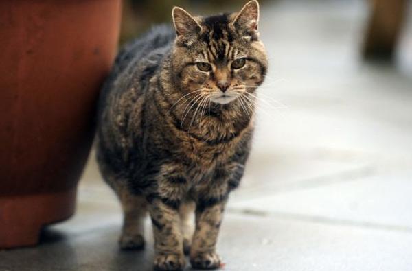Кошка Люси, 39 лет Титул самой старой кошки в мире принадлежит Люси из Южного Уэльса. Хозяину животного Биллу Томасу кошка досталась в наследство, после смерти крестной его жены Марии. Вначале он и не подозревал, насколько преклонного возраста его животное, пока знакомые бывшей хозяйки не сообщили, что помнят эту кошку пол своей жизни. Последние сомнения развеял ветеринар, подтвердивший, что Люси долгожительница. В свои 39 лет она продолжала охотиться в саду на мышей и отстаивать свою территорию.
