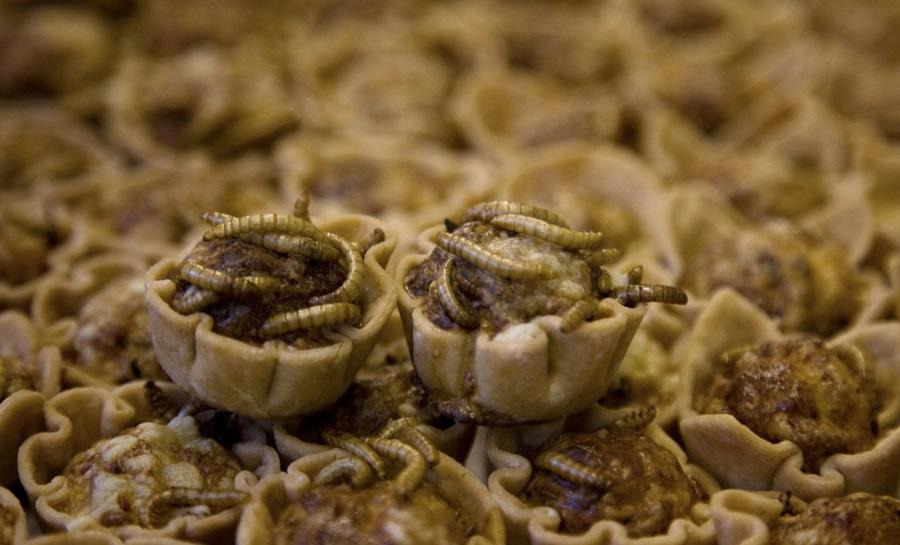 В будущем с дефицитом продуктов ученые собираются бороться именно с помощью насекомых. Чтобы подготовить к этому жителей планеты морально, некоторые компании уже производят гибридные продукты вроде этих пирожных с заварным кремом и личинками мучного червя.