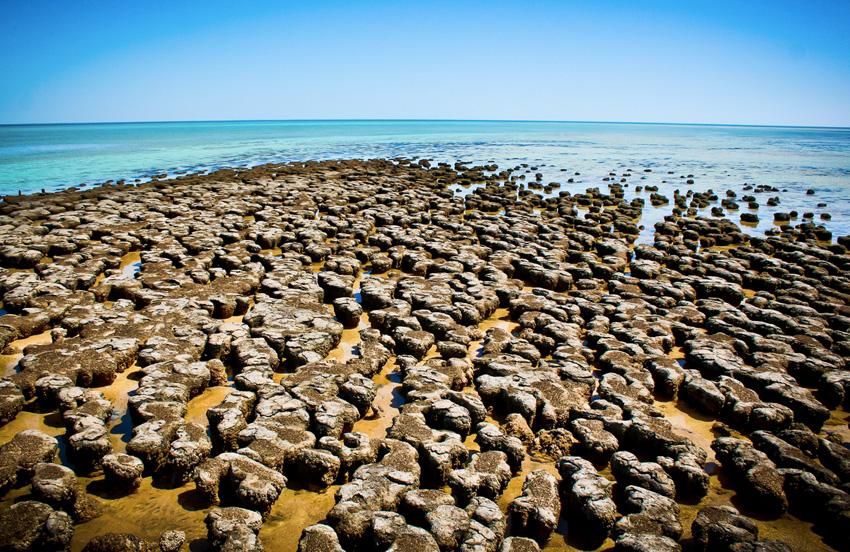 Как зародилась жизнь Сторонники теории «Первородного бульона» верят, что плодородная ранняя Земля самостоятельно сформировала все увеличивающиеся сложные молекулы, которые и дали начало жизни на Земле. Это могло случиться и на дне океана, и в кратерах вулканов и в толщах льдов. Принимая во внимание, что ДНК является доминирующей основой жизни на планете, РНК могла бы быть одной из первопричин зарождения жизни на нашей планете. Иные теории считают важнейшими аспектами для зарождающейся жизни электромагнитную и вулканическую активность. Некоторые верят в пансермию, гипотезу, согласно которой жизнь была принесена на Землю с метеоритами или кометами в форме микробов.