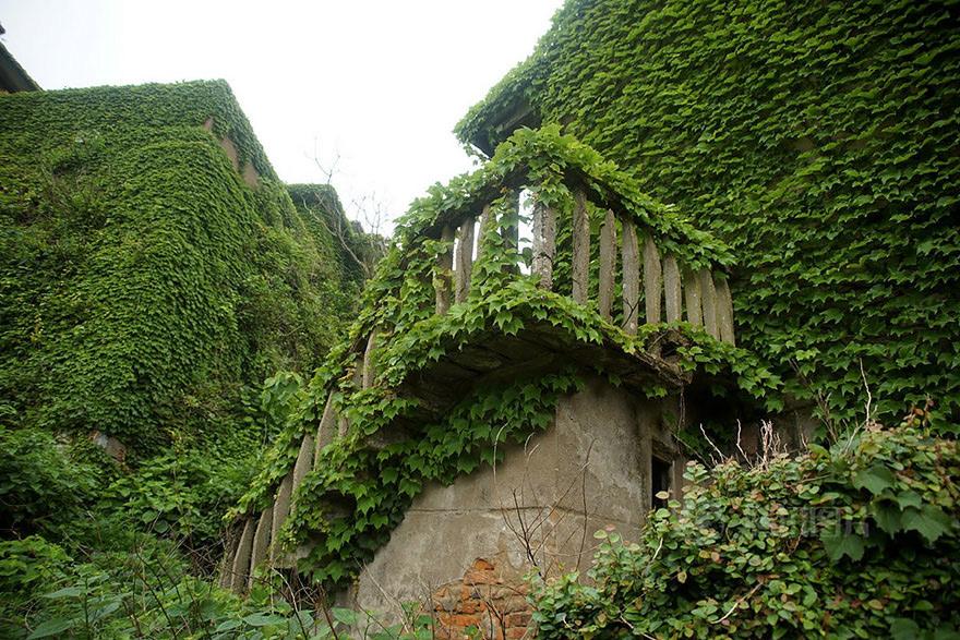 Все дома покрыты густыми зелеными лианами девичьего винограда.