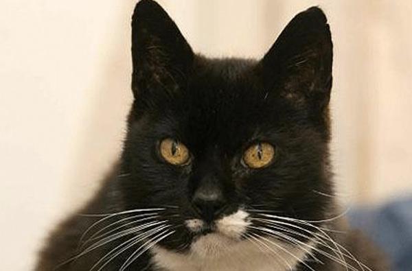 КотКрем Пафф, 38 лет и 3 дня Долгое время самым старым котом считался Крем Пафф из Техаса. Животное прожило 38 лет и 3 дня. По мнению хозяина Джейка Перри, не последнюю роль в продолжительности жизни питомца сыграл рацион: кота он кормил беконом, яйцами, брокколи и спаржей.