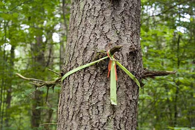 Маркировать тропу Заблудиться в лесу — проще задачи человек еще не выдумывал. Бывалые ходоки берут с собой компас и умеют с ним грамотно обращаться, но и они не отказываются от паракорда. С помощью крепкого, надежного шнура, можно легко маркировать дерево на нужном повороте.