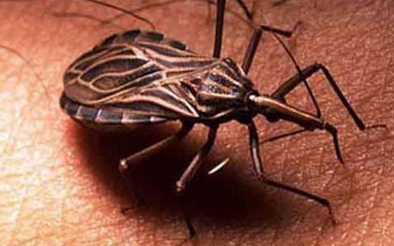 паразиты живущие на коже человека