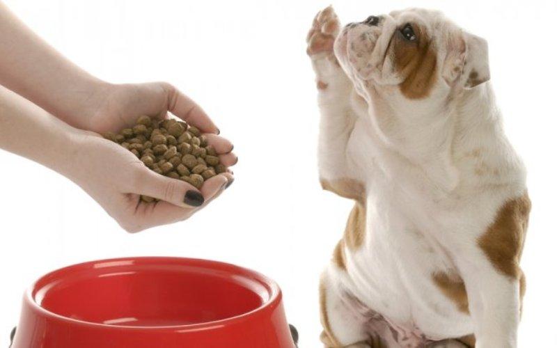 Отношение собак Сразу же по окончанию тестов, актер и человек, сохранявший нейтралитет, предлагали собакам еду. Собаки, как правило, избегали брать лакомство у актера-отказника, который вел себя плохо по отношению к их хозяевам. Зато чаще брали еду у «помощника», контрольного актера или у нейтральной персоны. Несмотря на то, что собаки явно были настроены против актера, отказавшегося помочь, при всем при этом собаки в среднем брали пищу не чаще чем у «помощника» по сравнению с контрольным актером или нейтральной персоной.