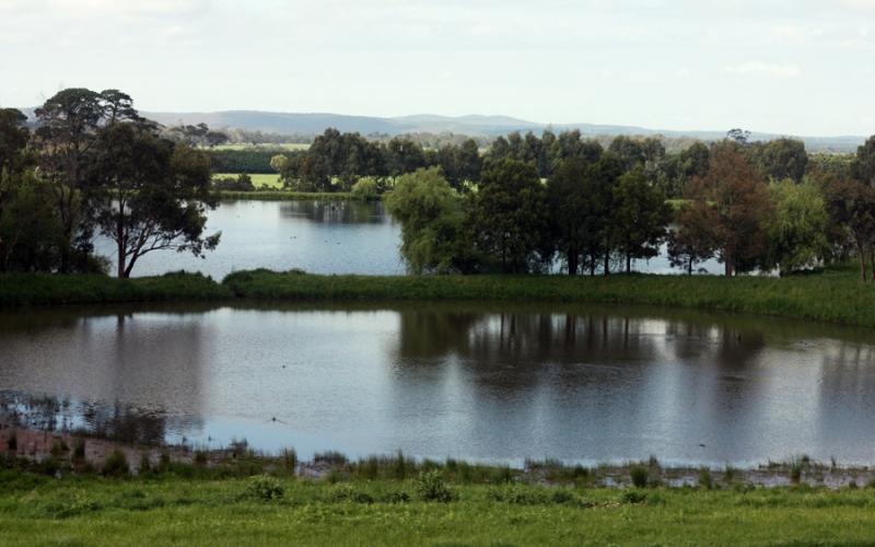 Лав-Несское чудовище Британский кузен знаменитой Несси обитает в озере у городка Лавборо в графстве Лестершир. В основном прославился тем, что время от времени поедает уток, имеющих неосторожность приводниться на обманчиво-безмятежную гладь озера.