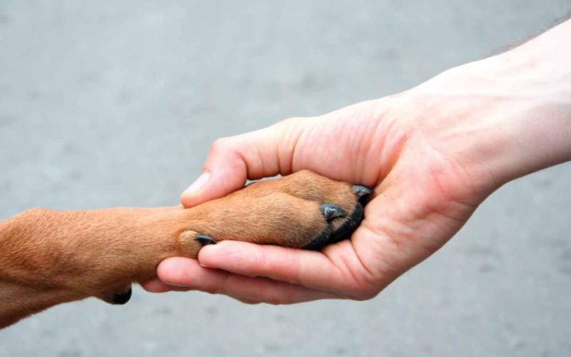 Результаты эксперимента Известно, что собаки очень чувствительны к действиям человека, направленным на них, но до этого момента было непонятно, в состоянии ли они оценить сторонние взаимодействия. Новое исследование позволяет предположить, что собакам свойственно так называемое «социальное подслушивание», позволяющее им разобраться в сторонних взаимодействиях. Так что, если у вас есть собака, вам будет приятно осознавать то, что если вы попадете в конфликтную ситуацию, на вашей стороне будет, по крайней мере, один верный друг.
