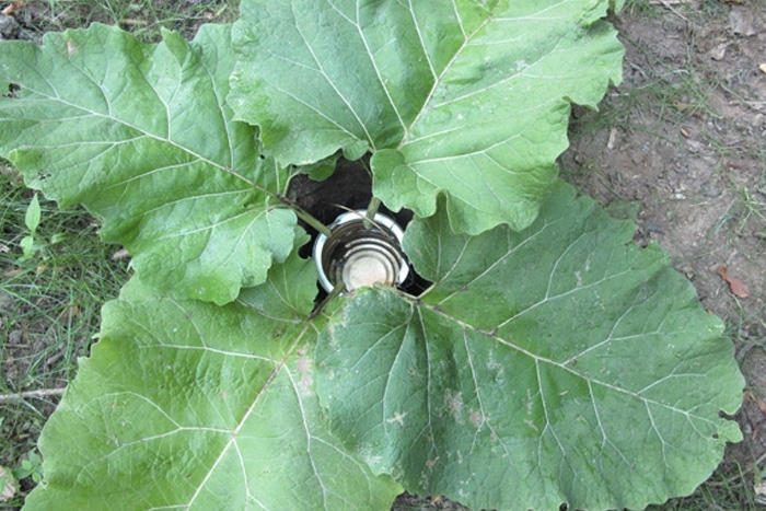 Водосборник Листья могут стать незаменимым инструментом при сборе воды. Можно, конечно, просто выставить какую-нибудь емкость, но если на счету каждая капля, стоить увеличить площадь поверхности. Для этого подойдут обычные листья, и чем больше они будут по размеру, тем лучше. Для сбора необходимо выкопать небольшую яму, разместить в ней емкость и расположить листья таким образом, чтобы вода во время дождя стекала с них в ваш резервуар.