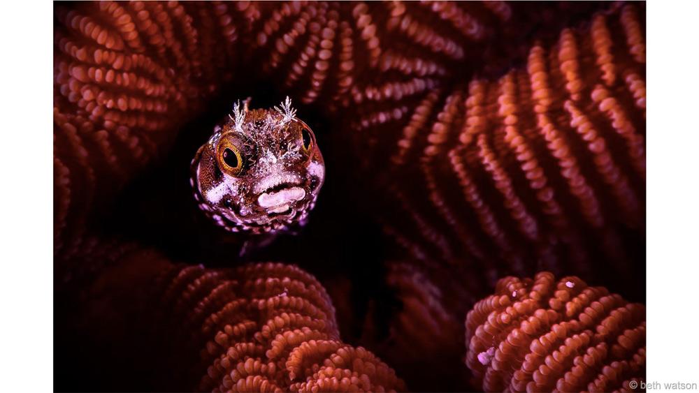 Маленький мир Победитель в категории «Водная жизнь» Бет Уотсон Снимок был сделан у берегов острова Бонайре. В коралловых рифах фотограф запечатлела рыбку морская собачка.