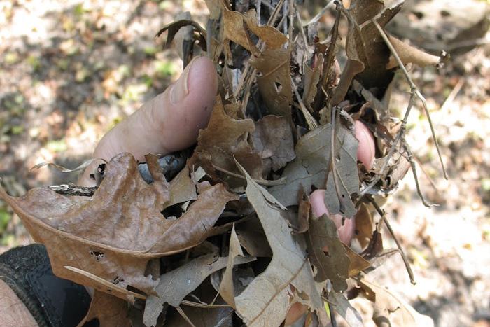 Трут В качестве трута подойдет абсолютно все, что в теории должно быстро загореться. И сухие листья и трава — один из лучших таких материалов. Расчистите под костер небольшой участок, разложите дрова, оставив место для циркуляции воздуха, а сверху положите сухих листьев и подожгите. Когда образуется огонь, постепенно можно начинать добавлять мелкий хворост.