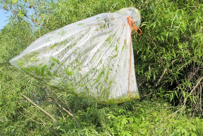 Вода В отсутствии других источников живительную влагу можно добыть из растений. Для этого вокруг ветки дерева необходимо завязать пластиковый пакет или срезать растение, поместить в пакет и оставить на солнце. Через какое-то время благодаря испаряющейся влаге вы получите небольшое количество воды.