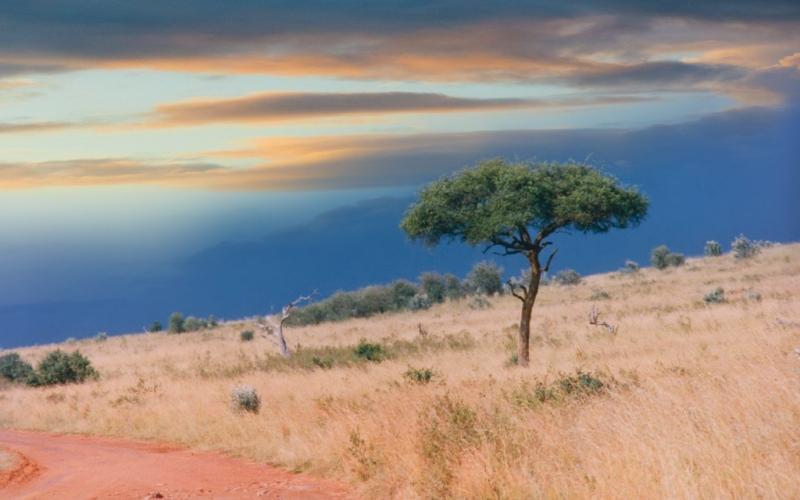 Плато Сомали На северной окраине полуострова Африканский Рог на территории Сомалийской Демократической Республики лежат Эфиопское нагорье (которое еще иногда называют «Крышей Африки») и плато Сомали. На рассеченном ущельями плато и прилегающих долинах днем с огнем не сыскать ни капли воды – дожди выпадают крайне редко, в основном в африканскую зиму, и уровень годовых осадков не превышает 100-300 мм. Поэтому здесь редко можно встретить живое существо, а о занятии земледелием люди в этих местах даже не думают. Когда-то Сомали славилась своими национальными заповедниками, но сегодня все природные парки заброшены, а посещение их невозможно или связано с большим риском.