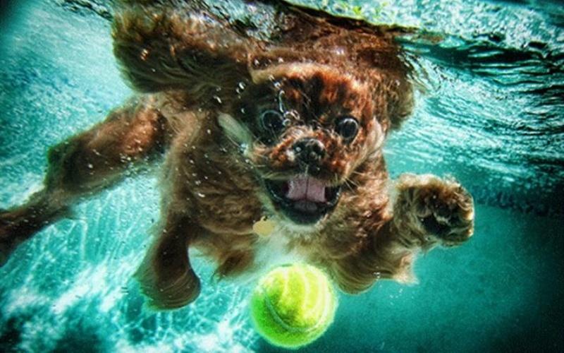 Водные гонки Для этой тренировки вам потребуется небольшой мяч, который не утонет в воде. Бросьте мяч в воду так далеко, как только сможете и плывите за ним, таким образом, вызвав собаку на гонку. В первый раз, попробуйте обойти соперника в вольном стиле. Когда вы доберетесь до мяча (или собака, если она опередит вас), отдохните секунд 30. Затем, повторите все с начала еще 3 раза, каждый раз меняя стиль плавания (брассом, на спине или баттерфляем).