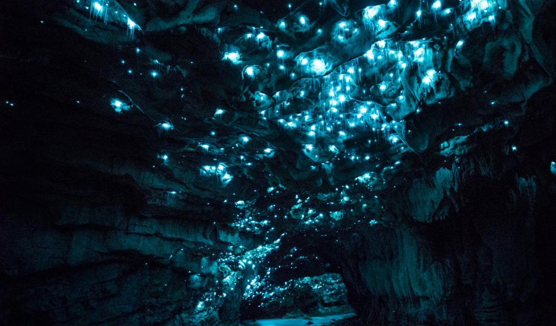 Эти насекомые активны только в ночное время. Наблюдатели описывают опыт посещения пещеры, как пребывание под звездами темной ночью.