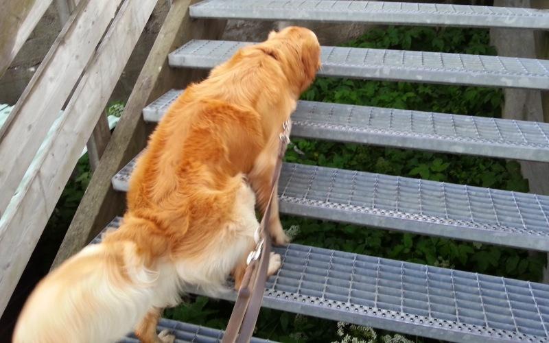 Восхождение по лестнице Когда вы начнете выполнять это упражнение, вы поймете, как благотворно оно действует сердечно-сосудистую систему, повышает выносливость и сжигает лишние калории. Найдите лестницу длиной как минимум в 20 ступеней и вместе с собакой начните восхождение в быстром устойчивом темпе. Вернитесь к началу лестницы и отдохните 20 секунд. Повторить 5 раз.