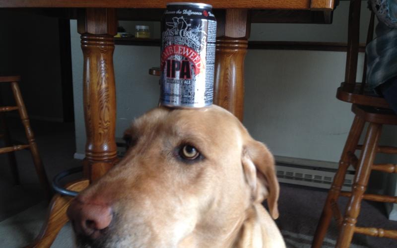 Обучение может быть и развлечением Если ты хочешь, к примеру, научить своего пса приносить тебе пиво из холодильника, необходимо связать его инстинкты с запахом пива. Втирая немного пива каждый день в его любимую игрушку, ты научишь пса ассоциировать этот запах с игрушкой. Теперь, когда собака учует этот запах и услышит команду, она соотнесет это со своим внутренним инстинктом найти и принести искомое. Так игра для полицейских собак превращается в работу.