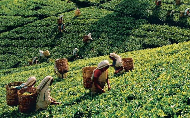 Цейлон Годы существования: с 1505 по 1972 гг.  Эта страна, расположенная в Южной Азии, ныне известна как Демократическая Социалистическая Республика Шри-Ланка. Цейлон имел богатую историю международных отношений, будучи с 7 века торговым центром для арабов, а после для европейцев. Цейлоном поочередноправили португальцы, затем голландцы и, наконец, британцы, от которых Цейлон обрел полную независимость в 1948 году. В 1972 году Цейлон сменил название на Шри-Ланка.