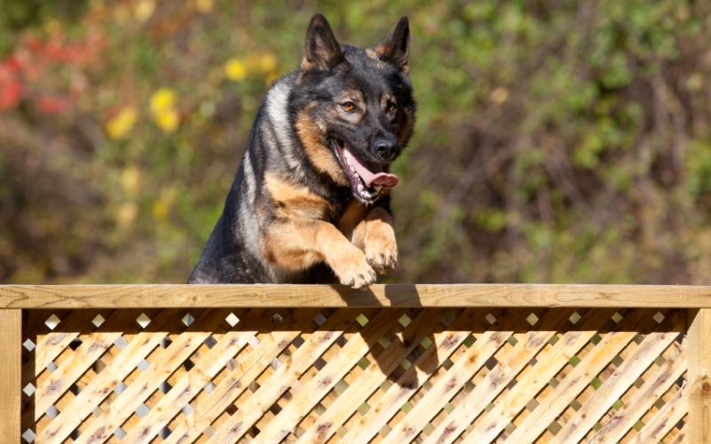 Бег с препятствиями Бег с преодолением препятствий станет интересным упражнением и для вас и для собаки. Найдите парк или дорожку, вдоль которой с одной стороны стоят скамейки. Добегите до первого препятствия и прыгните на скамейку двумя ногами одновременно. Спрыгните и заставьте пса повторить ваш нелегкий путь. Вам нужно «пометить», таким образом, 20 скамеек.