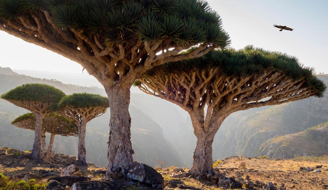 Архипелаг Сокотра Йемен Четыре острова и пара скал: один из самых изолированных в мире архипелагов, расположенный неподалеку от пиратского Сомали может похвастать обилием эндемичных видов фауны и флорой, которой нет больше нигде в мире.