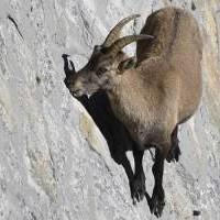 10 существ, которые обладают суперспособностями