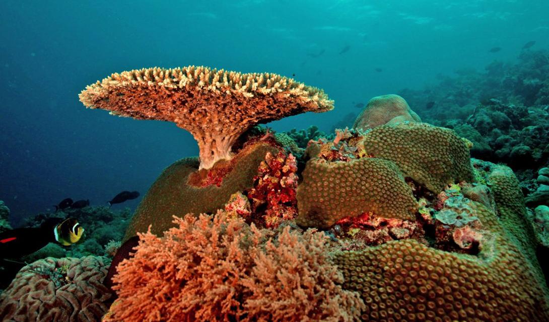 Одна из самых популярных экскурсий — однодневная поездка с побережья Боракай до Ariel's Point, где все желающие могут попрыгать со скал в море, или просто обследовать рифы на байдарках.