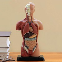 Части тела, которые нам совершенно не нужны