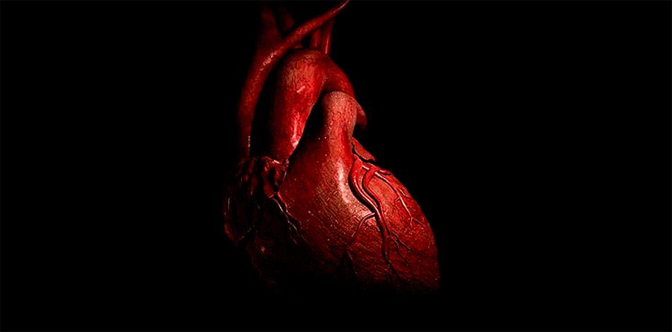 Сердце Увеличение частоты сердечных сокращений означает, что количество крови, перекачиваемое с каждым ударом, сокращается. В результате этого, сердце марафонца бьется чаще, чтобы поддерживать тот же объем крови в мышцах. Это часто является причиной обезвоживания. Падение же сердечного ритма почти всегда совпадает со снижением скорости движения. Достижение финиша сверхдлинной дистанции всегда связано с определенным риском для бегуна. После того, как марафонец остановился, его икры, всю дорогу оттягивавшие на себя максимальный объем крови, внезапно отдадут ее всему телу. Добавьте к этому капельку обезвоживания — и перед вами идеальный рецепт падения артериального давления, которое может привести спортсмена даже к глубокому обмороку.