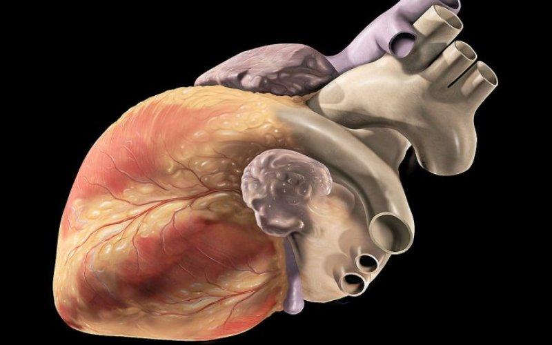 Жиры, углеводы… а белки? В первых годах 20-го века было опубликовано довольно часто цитируемое исследование, целью которого было изучение влияния на сердце жиров и углеводов разных типов. Белки, однако, нигде упомянуты не были, так как не существовало еще никакой информации о влиянии протеина на состояние здоровья сердечной мышцы. В этом и подобных исследованиях уровень потребления белка сводился к рекомендуемой суточной норме, позволявшей только не допустить белковую недостаточность, но никак не сказывающуюся на здоровье в целом. Тогда просто считалось, что потребление этого класса питательных веществ не может иметь физиологической пользы.