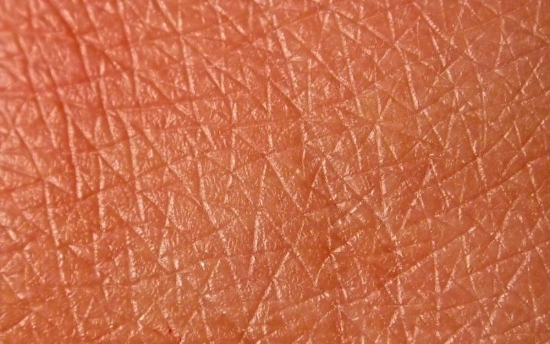 Клетки кожиПолное замещение клеток эпителия происходит за 14 дней. Клетки кожи формируются в глубоких слоях дермы, постепенно выходят на поверхность и заменяют старые клетки, которые отмирают и отшелушиваются. За один год наш организм продуцирует около двух миллиардов новых клеток кожи.