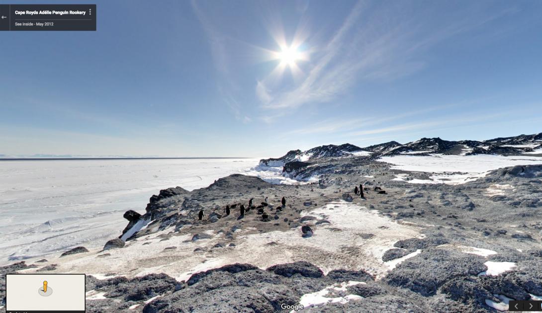 Мыс Ройдс в Антарктиде является особо охраняемым — из-за гнездовий пингвинов.