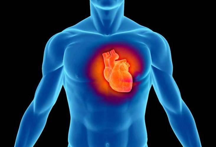 Сила белка для вашего сердца Позже научная точка зрения на этот вопрос постепенно переменилась. Ученые начали искать связь между белком и артериальным давлением. Поспешно было сделано объявление, что растительные белки бобовых и зерновых были более эффективны, чем белок животного происхождения. Позже было сделано опровержение, так как не было никаких признаков того, что растительный белок лучше животного влиял на здоровье сердца. Но, по крайней мере, была создана эффективная диета, включавшая в себя ненасыщенные жиры и смесь из растительных и животных белков, которая значительно снижала риск сердечных заболеваний.