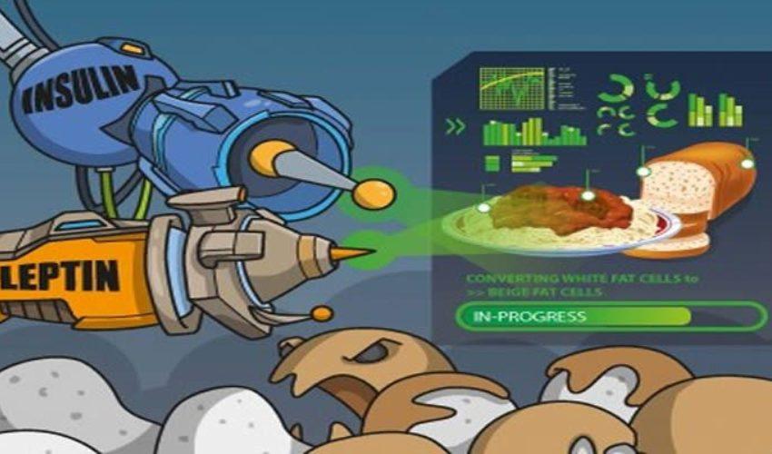 Мотор, жиры, свет! Как говорится в статье, опубликованной в журнале Cell, медики с помощью высокочувствительной техники, которую они использовали для изучения жировой ткани у мышей, выяснили интересный факт. Жировая ткань содержит большое количество нервных окончаний, которые реагируют на молекулы лептина и сообщают мозгу об их присутствии. Далее исследователи активировали открытые ими нервные клетки при помощи лазера, вследствие чего жировая ткань мышей начала быстро саморазрушаться, вызывая снижение количества жира.