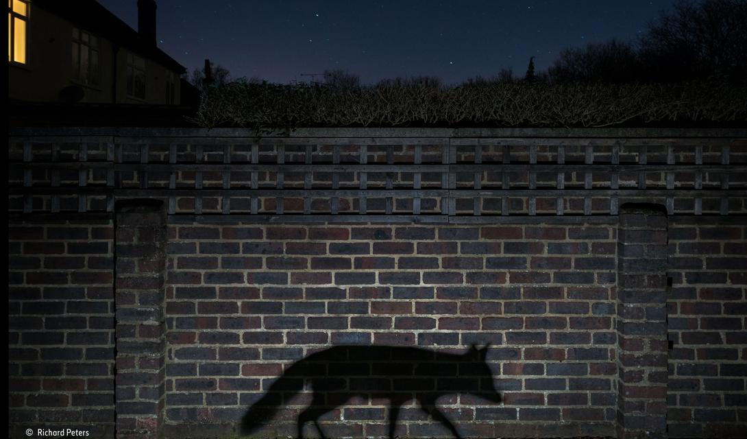Shadow Walker Категория: лучший городской снимокАвтор: Ричард Питерс Ричард хотел показать, как близко находится дикая природа к цивилизации. Силуэт пойманной им в объектив лисы отображается на одной из стен аббатства Суррей, Англия. В обычные дни, это людное и очень оживленное место.