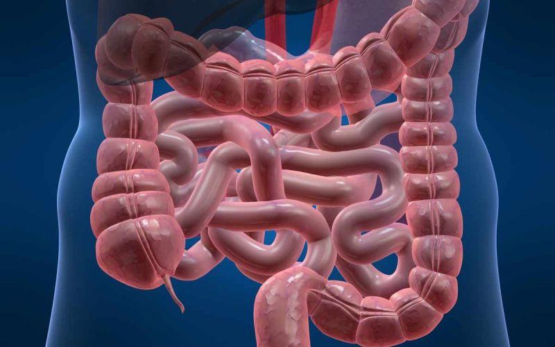 Кишечник Если не заострять внимание на клетках эпителия кишечника, которые заменяются каждые 5 дней, средний возраст кишечника будет равняться примерно 15-16 годам.