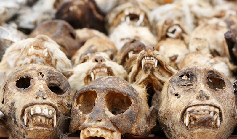 Немного о мертвецах Долгое время обряд поднятия мертвых, свидетелями которого бывали и белые люди, считался одной из самых необъяснимых религиозных загадок. Так продолжалось бы и по сей день, если бы на помощь науке не пришел этнобиолог Дэвис Уэйд, сумевший провести несколько опасных экспериментов. Отважный ученый установил, что бродящие по Гаити «живые мертвецы» никогда не умирали. Секрет крылся в особом порошке, применяемом шаманами для создания зомби. С помощью особой смеси, содержащей тетродотоксин, бокор вводил человека в состояние глубокой комы и спокойно ждал, пока семья несчастного не похоронит тело.Спустя день после погребения колдун приходил на кладбище и выкапывал свежеиспеченного раба: кислородное голодание, помноженное на токсичное воздействие зелья, приводило к повреждению головного мозга жертвы — области, отвечающие за память и речь, попросту отмирали, и из могилы вставало существо, умеющее лишь выполнять команды колдуна.