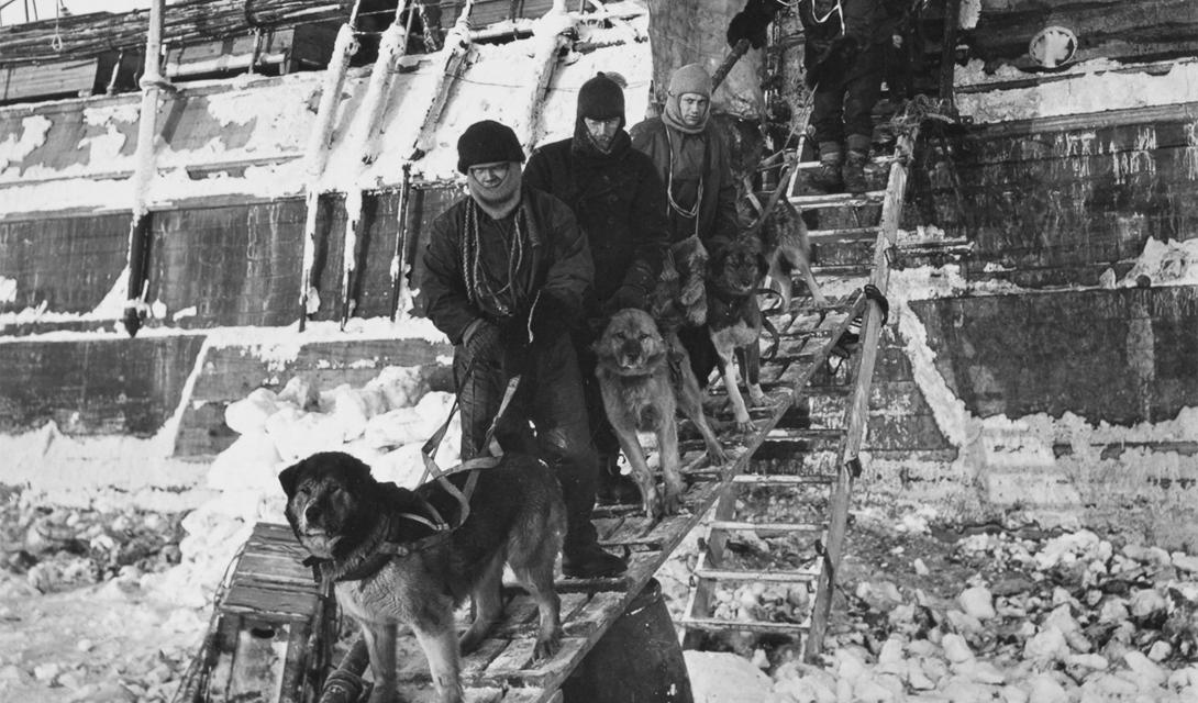 Матросы выводят корабельных псов на прогулку. Привычные ко всему, выносливые, умные собаки были хорошей опорой всей экспедиции.