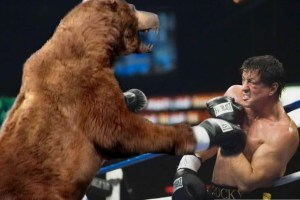 normal_rocky_and_bear