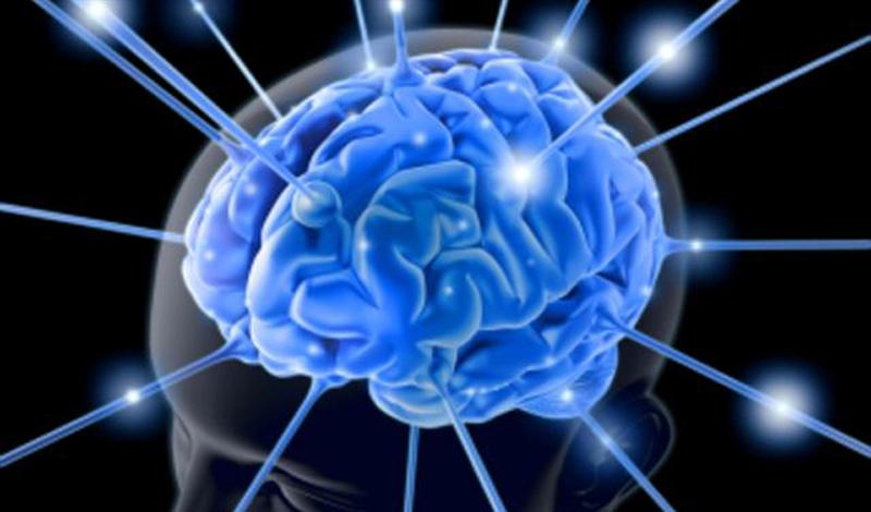 10% мозга В историю о всего лишь 10% мозга, которые якобы задействует человек в жизни, предпочитают верить многие. Всему виной неправильно истолкованное утверждение психолога Уильяма Джеймса: ученый имел в виду, что человек активно использует 10% мозга, а остальные 90% выполняют поддерживающую функцию.