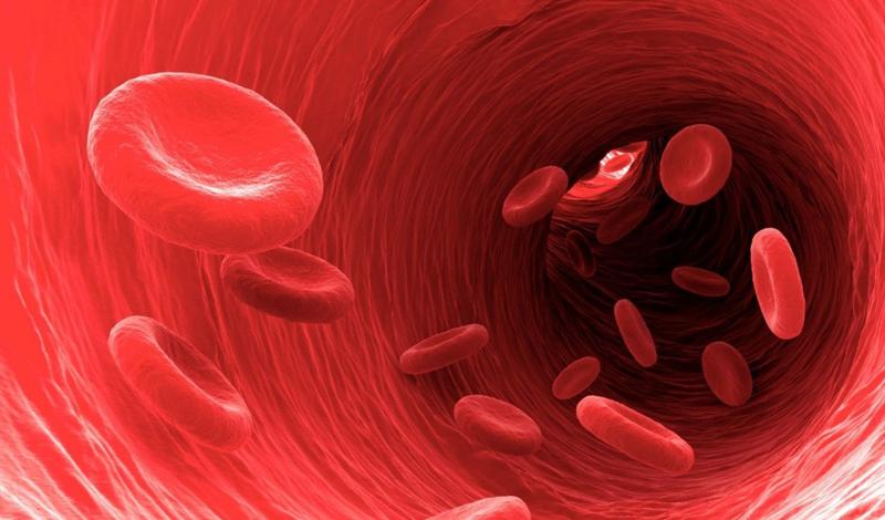 Кровь Фильмы о вампирах породили целую субкультуру молодежи, участники которой пьют кровь своих друзей. Мишель Ризерфорд зашла немного дальше: на протяжении последних 15 лет девушка пила свиную и человеческую кровь — последнюю она заказывала на тематических сайтах.