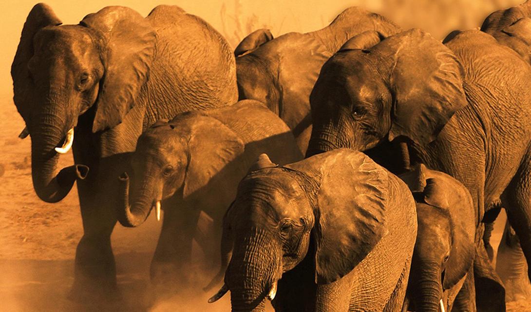 Ботсвана Дикая природа Центральной Калахари, заповедника, где черногривые львы охотятся на пугливых антилоп; соляные промыслы Макгадикгади и болотные угодья в дельте реки Окаванго: Ботсвана имеет все шансы стать вашим самым захватывающим приключением.