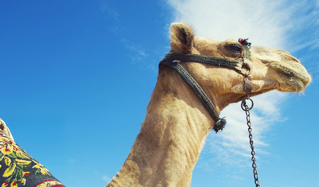 Египет На свете просто нет другого места, более величественного, чем Египет. Цивилизация, зародившаяся здесь, до сих пор волнует умы исследователей всего мира. Царственные пирамиды, загадочный Сфинкс, необъятные просторы пустыни — и яркие улочки Каира, будто обрамляющие все это великолепие.