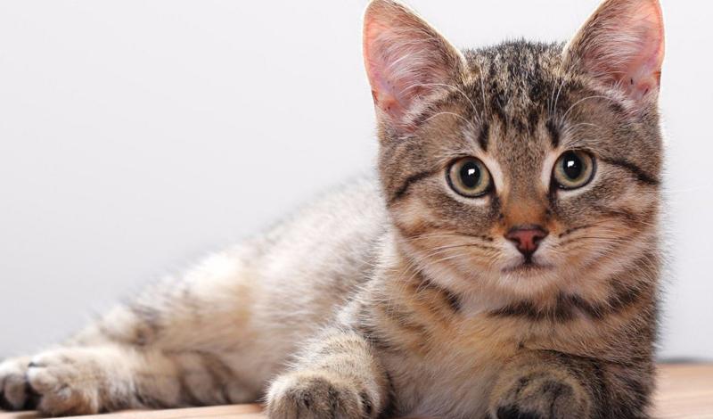 Кошки Кошки — наиболее распространенные домашние животные по всему миру. Людям нравятся кошки, поскольку те довольно умны и очаровательны. Чего нельзя сказать о некоторых хозяевах: 43-летняя Лиза Мичи просто не может жить без своего питомца. Два раза в день женщина вылизывает свою киску дочиста, куда бы та ни пряталась.