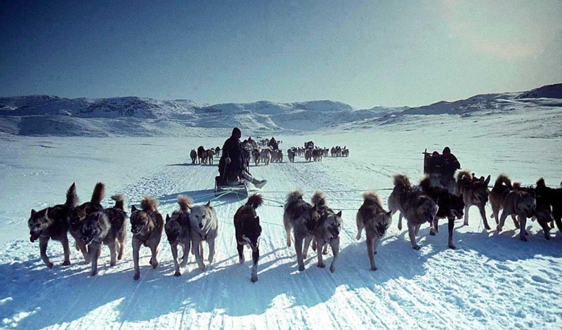 Эскимосы Численность: 2 234 человека Тот, кто ест сырую рыбу — вот, что означает слово «эскимос» на языке племени. Сами себя эти люди предпочитают называть иннуитами. На эскимосов оказало огромное влияние глобальное потепление. Вынужденные двигаться дальше от привычного ареала обитания, племена столкнулись с очень непривычными для себя условиями: у этих ребят просто не хватает лексикона, чтобы обозначить все появившиеся в их жизни предметы!