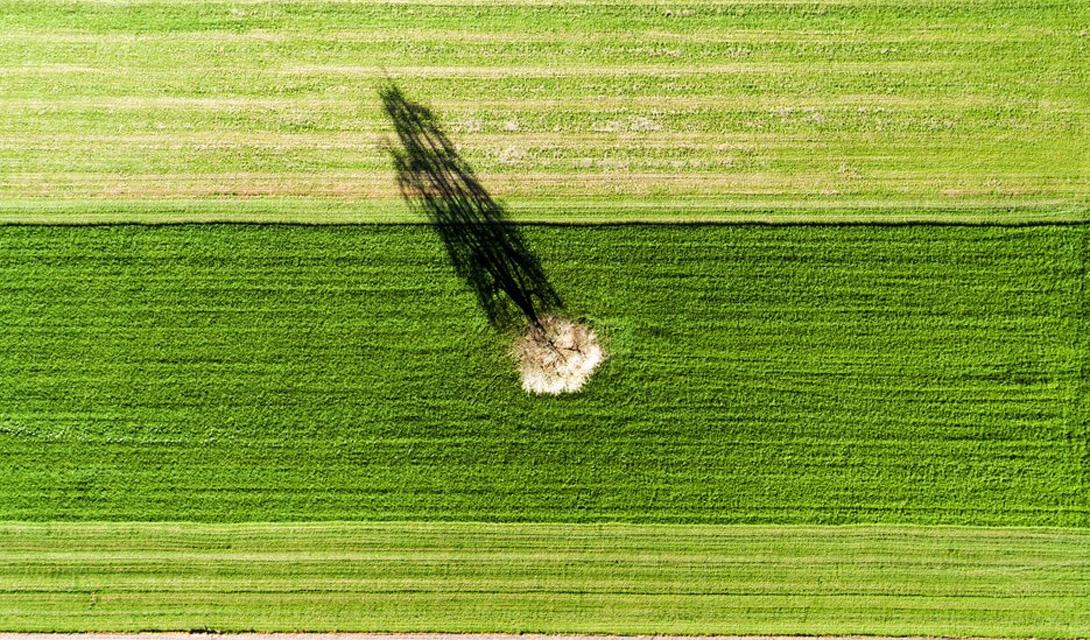 Одинокое дерево Алтвис, Швейцария