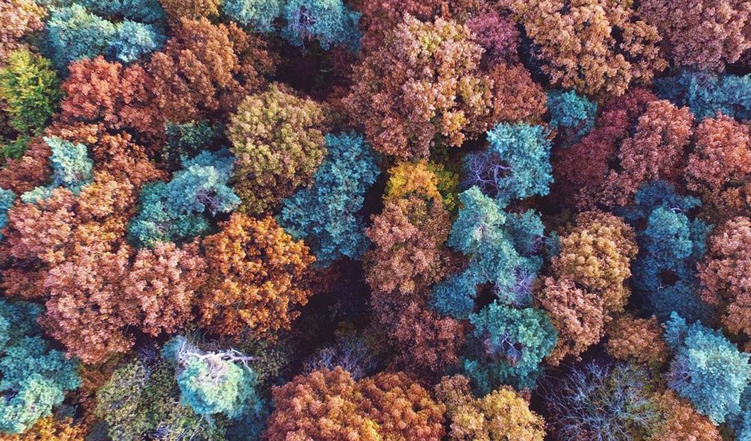 Цвета осени Остерхаут, Нидерланды